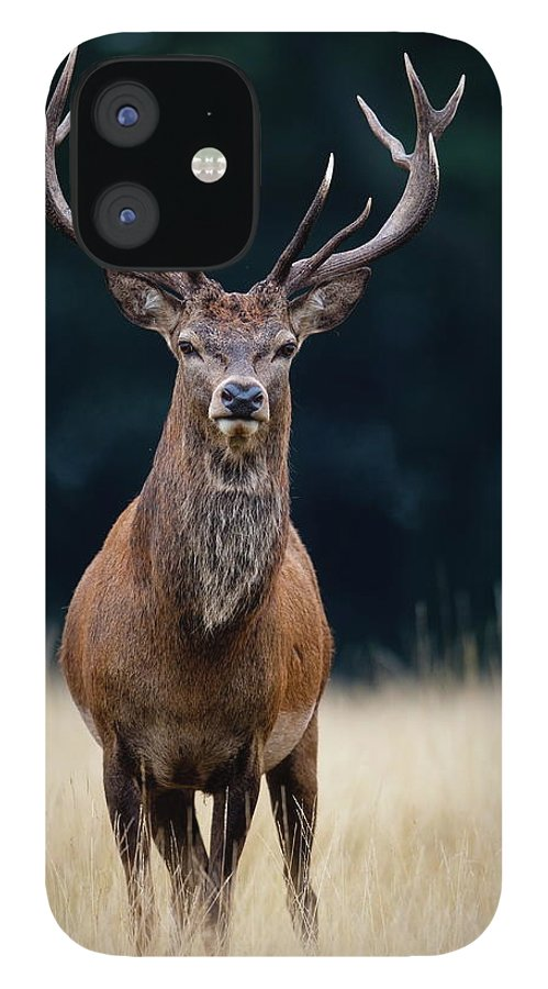 Rutting IPhone 12 Case featuring the photograph Red Deer by Damiankuzdak