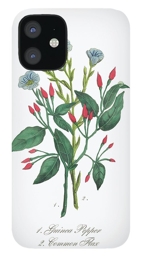 White Background IPhone 12 Case featuring the digital art Victorian Botanical Illustration Of by Bauhaus1000