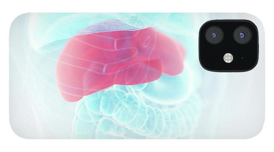 3d IPhone 12 Case featuring the photograph Illustration Of The Liver by Sebastian Kaulitzki/science Photo Library