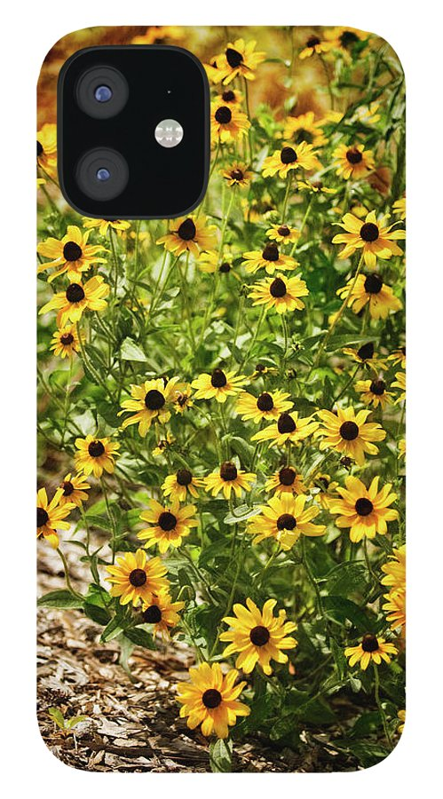 Rockville IPhone 12 Case featuring the photograph A Group Of Bossoming Black-eyed Susans by Maria Mosolova