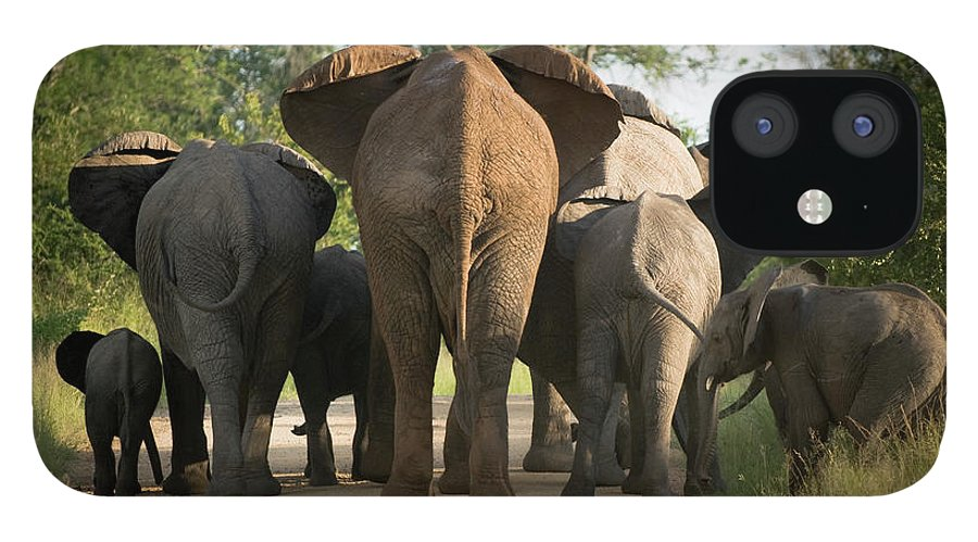 Cow IPhone 12 Case featuring the photograph A Herd Of Elephants Heading Away From Us by Jono0001