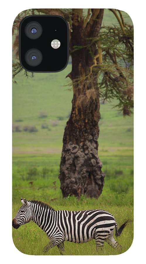 Plains Zebra iPhone 12 Case featuring the photograph A Plains Zebra In Ngorongoro by Mint Images - Art Wolfe