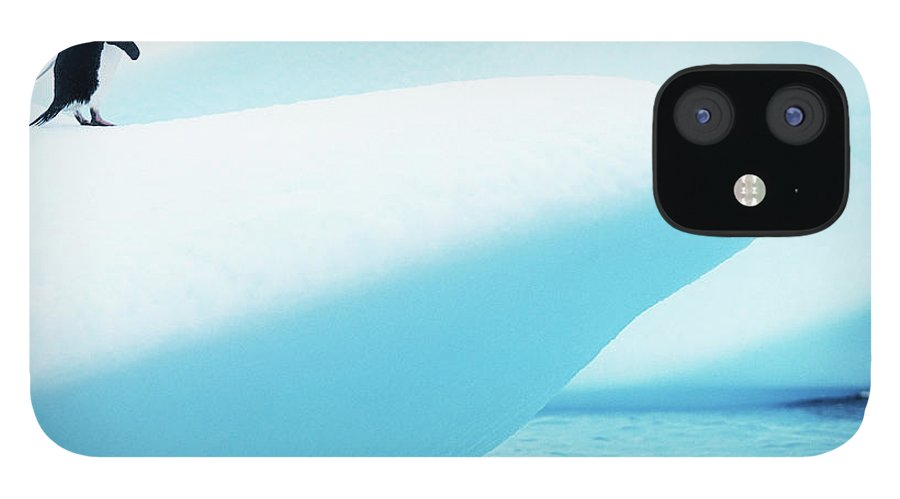 The End IPhone Case featuring the photograph Adelie Penguin Pygoscelis Adeliae by Paul Souders