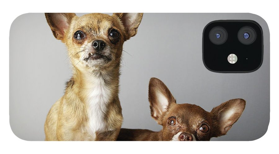 Animal Themes IPhone 12 Case featuring the photograph All Dog, No Cat by Laura Layera