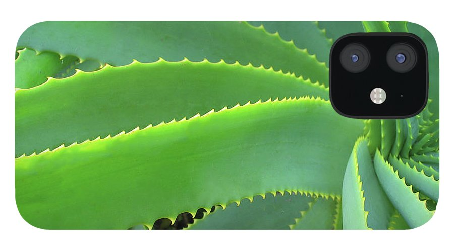 Natural Pattern IPhone 12 Case featuring the photograph Aloe Vera - Healing Plant by Lubilub