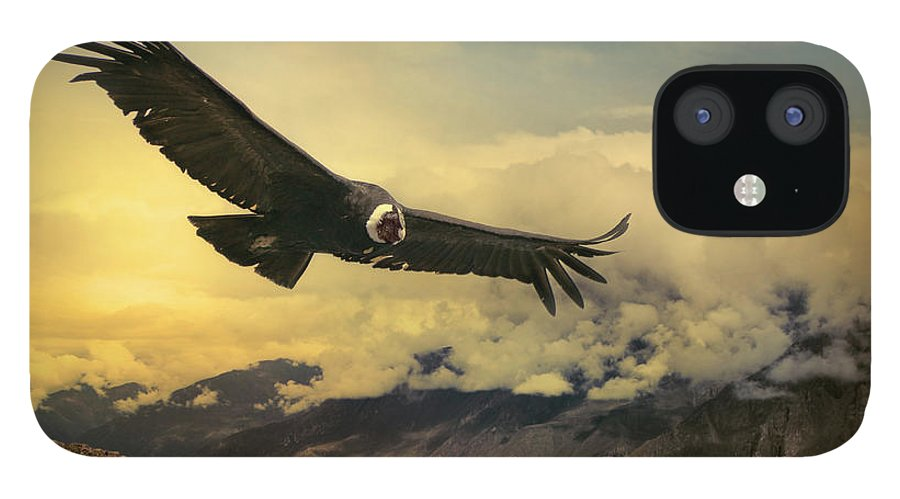 Animal Themes IPhone 12 Case featuring the photograph Andean Condor by Istvan Kadar Photography