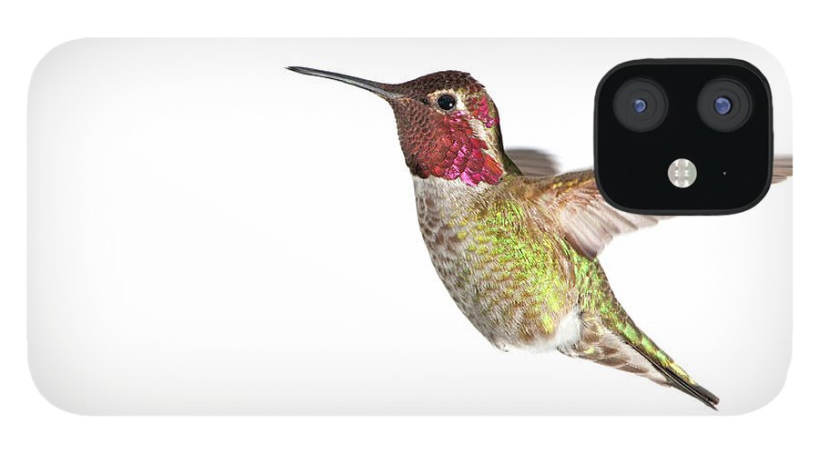 Hanging IPhone 12 Case featuring the photograph Annas Hummingbird - Male, White by Birdimages