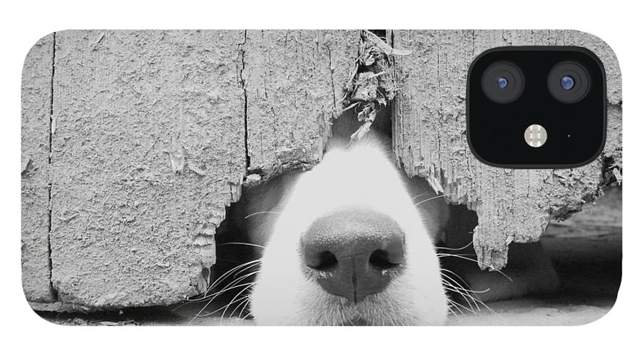 Pets IPhone 12 Case featuring the photograph Anyone Out There by By Jake P Johnson