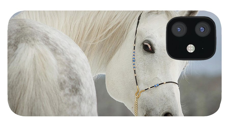 Horse iPhone 12 Case featuring the photograph Arabian Stallion by Photographs By Maria Itina