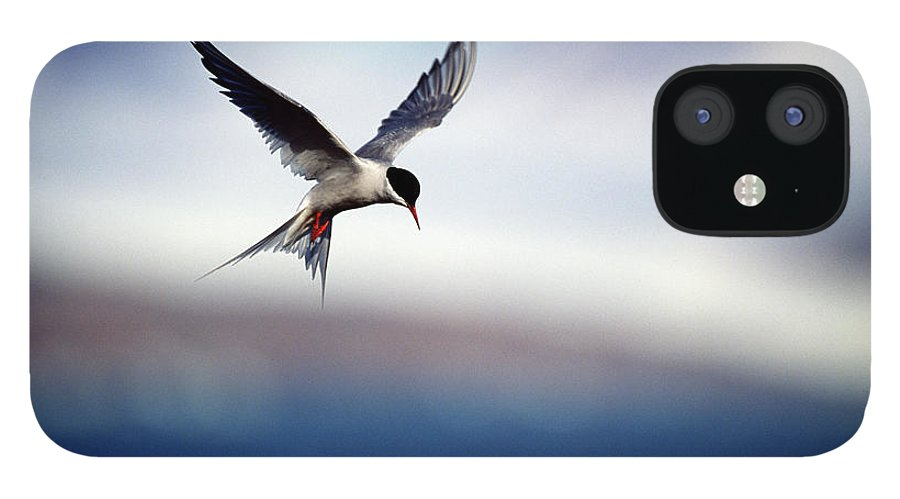 Svalbard Islands IPhone 12 Case featuring the photograph Arctic Tern Hovering by Mike Hill