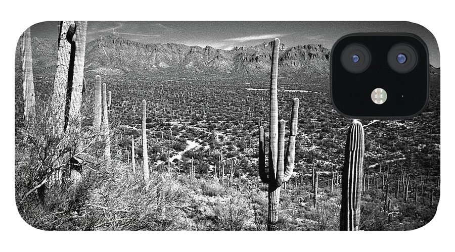 Saguaro Cactus IPhone 12 Case featuring the photograph Arizona, Tucson, Saguaro Np, Brown by James Denk