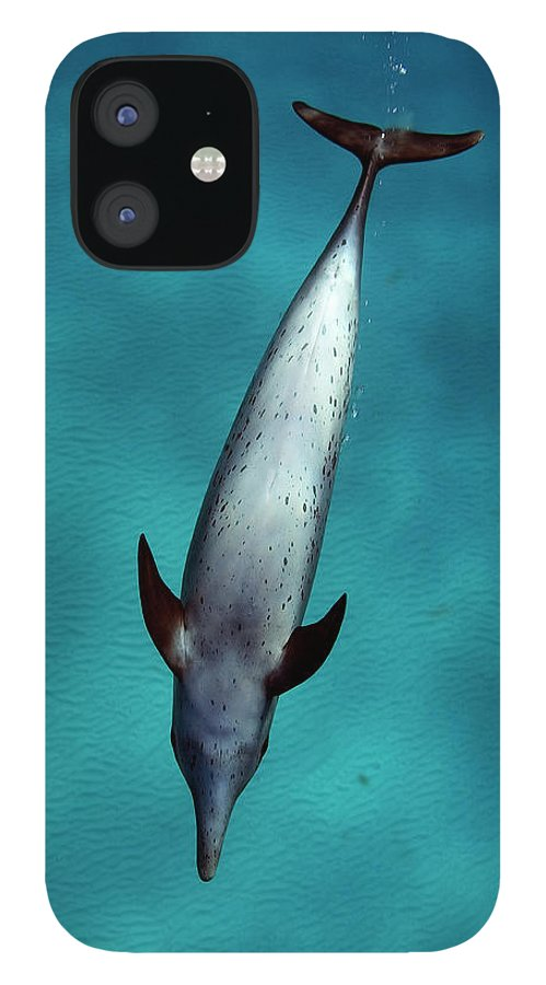 Animal Themes IPhone 12 Case featuring the photograph Atlantic Spotted Dolphin by Todd Mintz Www.tmintz.ca