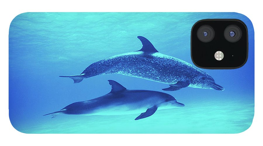 Underwater IPhone 12 Case featuring the photograph Atlantic Spotted Dolphins Stenella by Rene Frederick