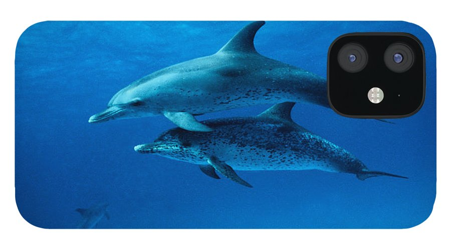 Color Image IPhone 12 Case featuring the photograph Atlantic Spotted Dolphins,stenella by Gerard Soury