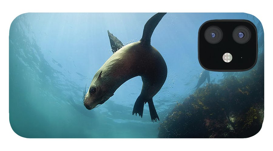 Underwater IPhone 12 Case featuring the photograph Australian Fur Seal With Sun Burst by Alastair Pollock Photography