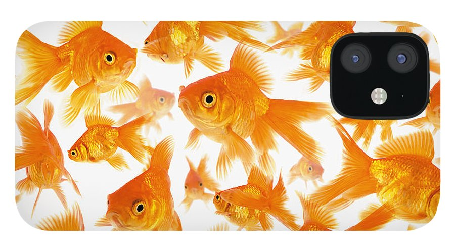 Orange Color IPhone 12 Case featuring the photograph Background Showing A Large Group Of by Cocoon