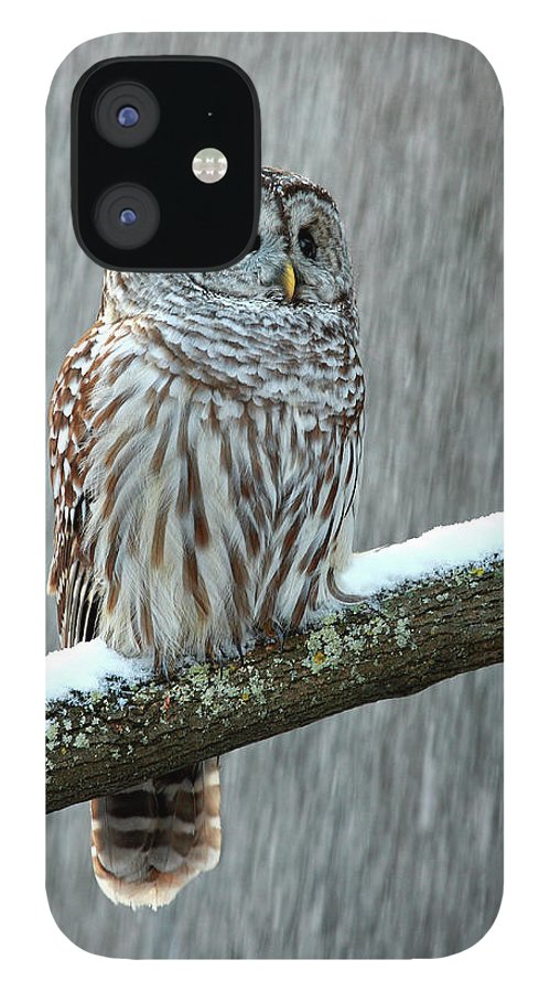 Alertness IPhone 12 Case featuring the photograph Barred Owl In The Snow by Alex Thomson Photography