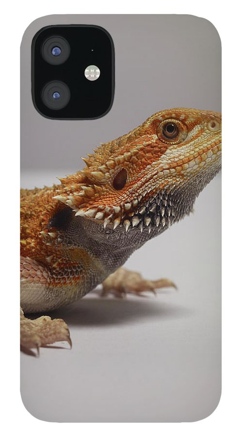 Alertness IPhone 12 Case featuring the photograph Bearded Dragon by Dan Burn-forti