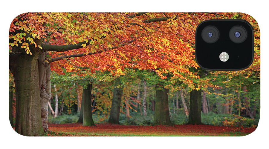 Orange Color IPhone 12 Case featuring the photograph Beautiful Autumn In Park by Lorado