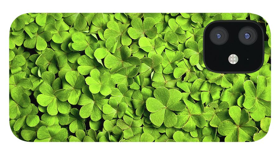Leaf IPhone 12 Case featuring the photograph Bed Of Clover by Kledge