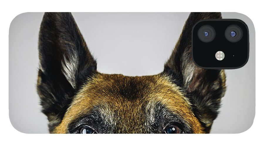 Pets IPhone 12 Case featuring the photograph Belgian Sheperd Malinois Dog Looking At by Joan Vicent Cantó Roig