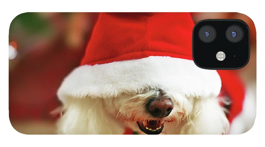 Pets IPhone 12 Case featuring the photograph Bichon Frise Dog In Santa Hat At by Nicole Kucera