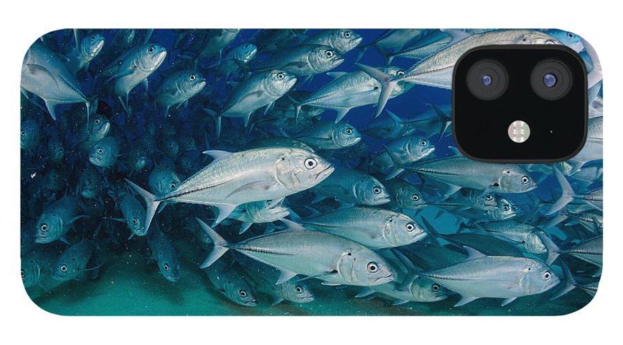 Bait IPhone 12 Case featuring the photograph Big Eye Trevally Jack Caranx by Leonardo Gonzalez
