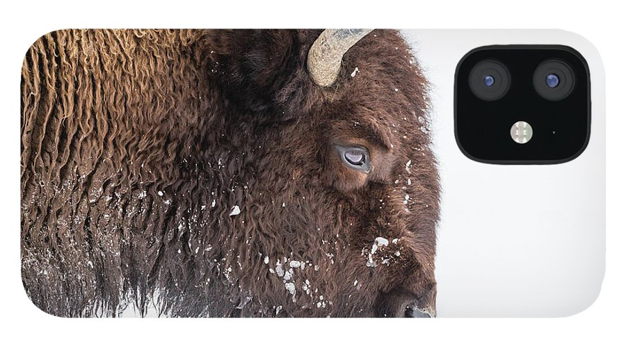 Vertebrate IPhone 12 Case featuring the photograph Bison In Winter by Kencanning