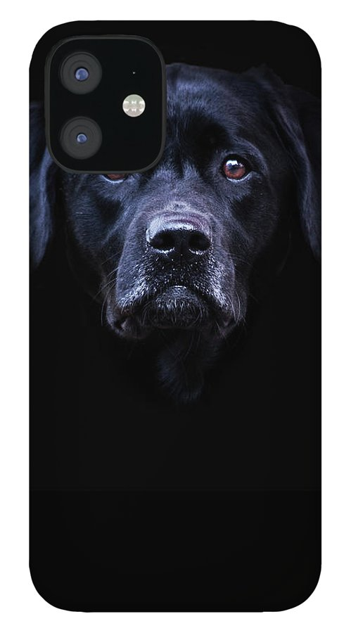 Black IPhone 12 Case featuring the photograph Black Lab by Trevor Slauenwhite