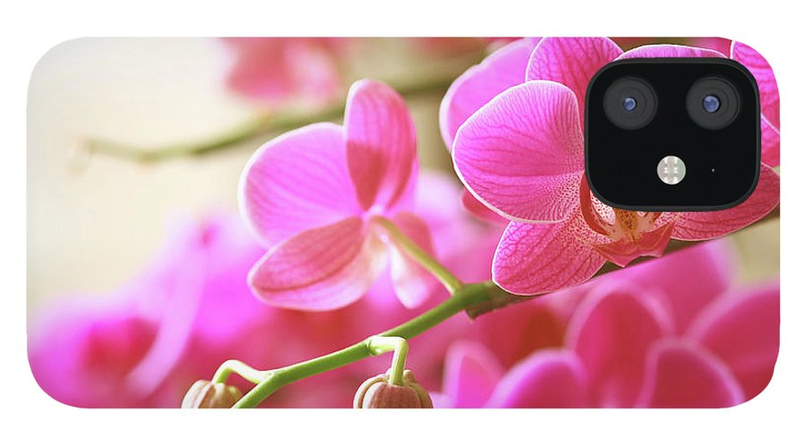 Environmental Conservation iPhone 12 Case featuring the photograph Blooming Pink Orchid On A Green Branch by Dreaming2004