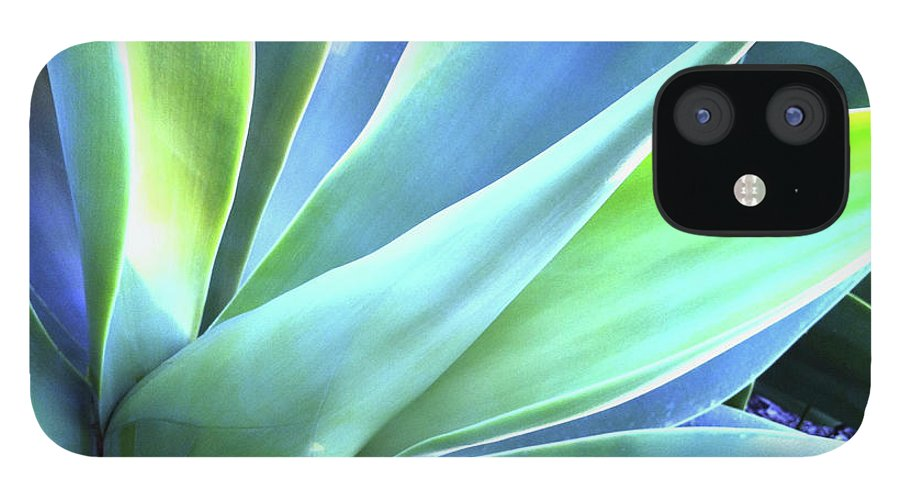 Agave IPhone 12 Case featuring the photograph Blue Agave by Denise Taylor