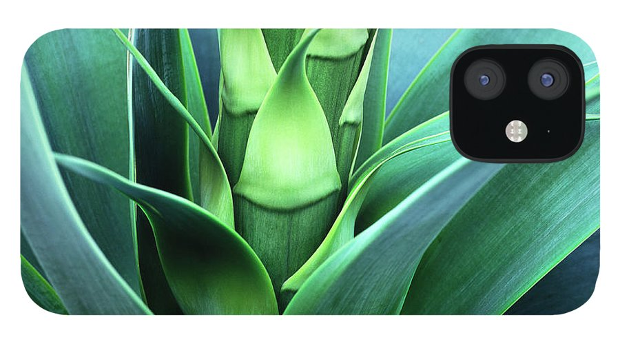 Agave IPhone 12 Case featuring the photograph Blue Agave by Oleg Moiseyenko
