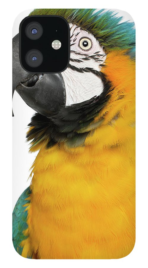 Macaw IPhone 12 Case featuring the photograph Blue And Yellow Macaw, Ara Ararauna by Life On White