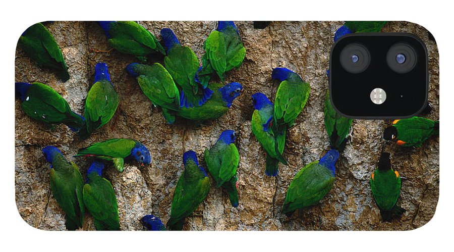 Blue Headed Parrot IPhone 12 Case featuring the photograph Blue-headed And Barrabands Parrots by Art Wolfe