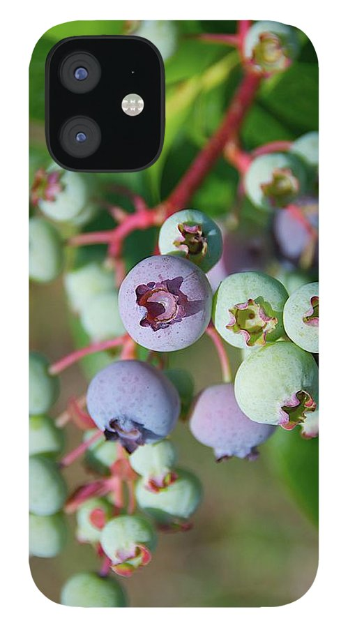 Large Group Of Objects IPhone 12 Case featuring the photograph Blueberries by ©howd, Howard Lau