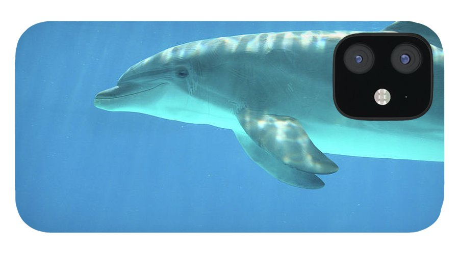Underwater iPhone 12 Case featuring the photograph Bottlenose Dolphin by Anzeletti