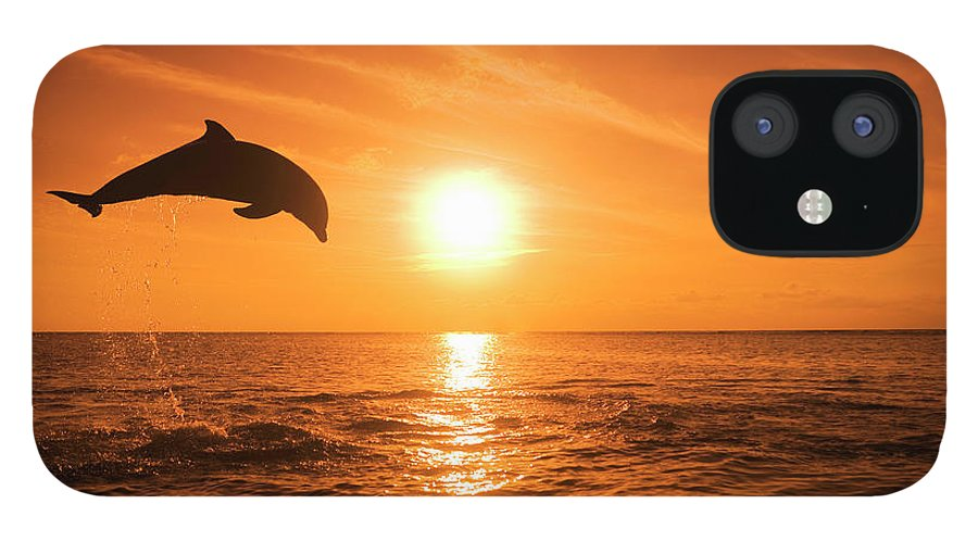 Orange Color IPhone 12 Case featuring the photograph Bottlenose Dolphin Tursiops Truncatus by Rene Frederick