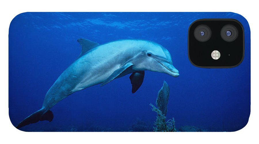 Underwater IPhone 12 Case featuring the photograph Bottlenose Dolphin,tursiops by Gerard Soury