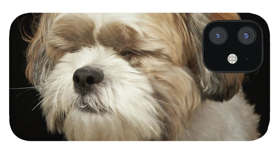 Pets iPhone 12 Case featuring the photograph Brown And White Shih Tzu With Eyes by M Photo
