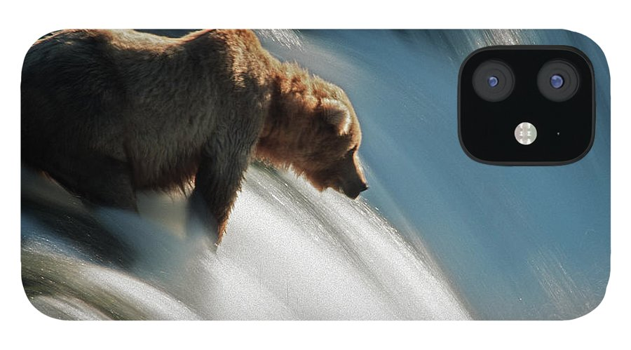 Poetry- Literature IPhone 12 Case featuring the photograph Brown Bear At Brooks Falls by Mark Newman