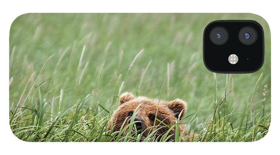Katmai Peninsula IPhone 12 Case featuring the photograph Brown Bear by Trevor Johnston / Eye Meets World Photography