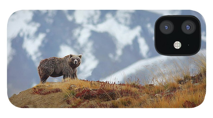 Brown Bear iPhone 12 Case featuring the photograph Brown Bear by Zahoor Salmi
