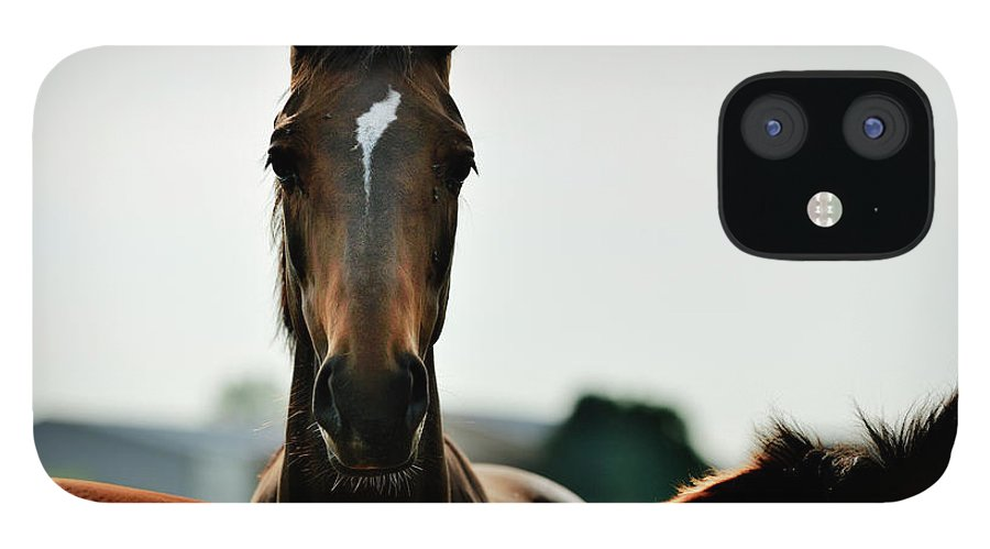 Horse IPhone 12 Case featuring the photograph Brown Horse Back Lit by Akrp