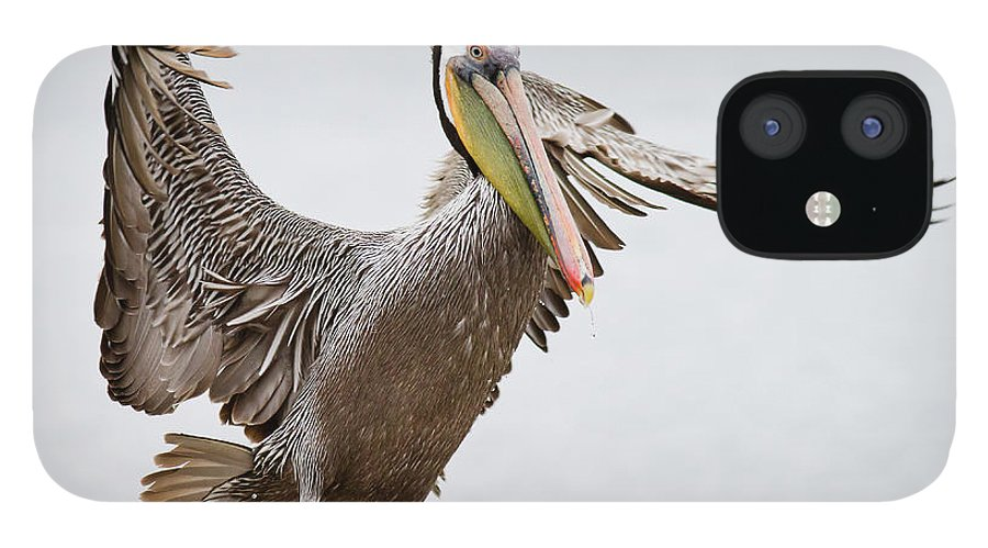 Oakland IPhone 12 Case featuring the photograph Brown Pelican by By Davor Desancic