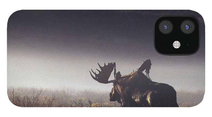 Majestic IPhone 12 Case featuring the photograph Bull Moose Alces Alces Walking Through by Johnny Johnson