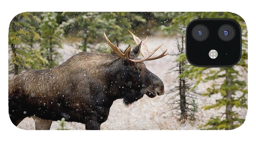Horned IPhone 12 Case featuring the photograph Bull Moose In Snow Fall by Tulissidesign