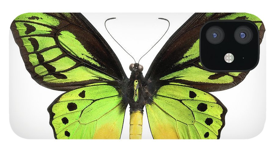 White Background IPhone 12 Case featuring the photograph Butterfly Lepidoptera With Green, Black by Flamingpumpkin