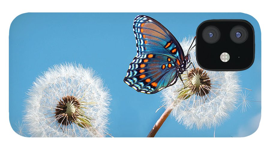 Animal Themes IPhone 12 Case featuring the photograph Butterfly On Dandelion by Maria Wachala