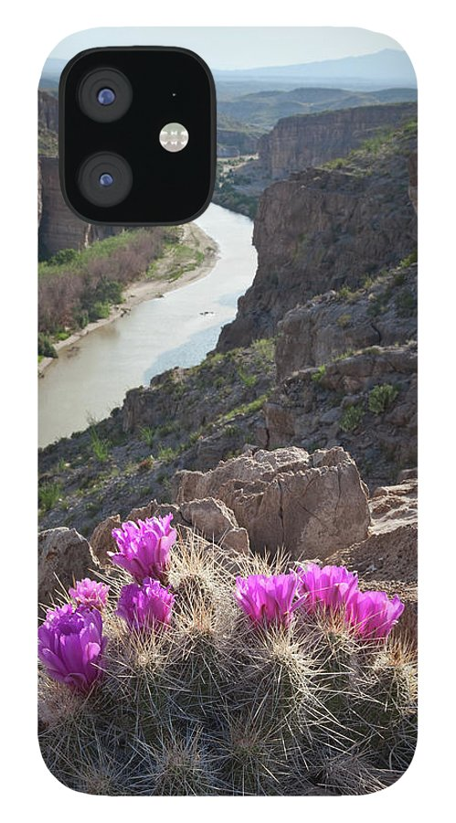 Chihuahua Desert IPhone 12 Case featuring the photograph Cactus Flowers Overlooking The Rio by Dhughes9