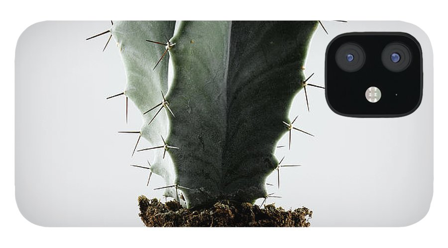 White Background IPhone 12 Case featuring the photograph Cactus On White Background by Chris Stein